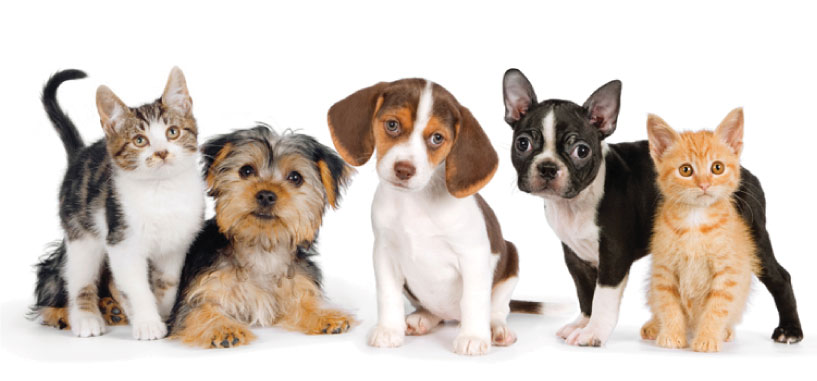 National Pet Month: How to Save Money on Pet Expenses
