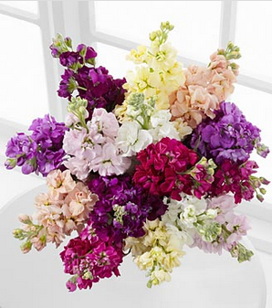ftd-wistful-wishes-gilliflower-bouquet