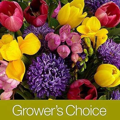 proflowers-growers-choice